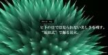福田式撮影術で撮影した花火をご覧になったことはありますか。