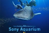 Sony Aquarium で沖縄美ら海の生き物を楽しみながら学びませんか。